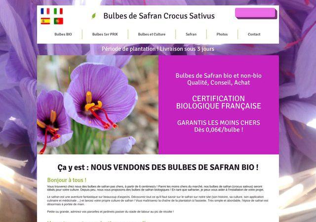 Vente des bulbes de Safran de qualité