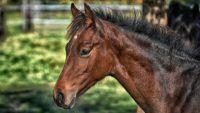 Tout sur l'alimentation du cheval