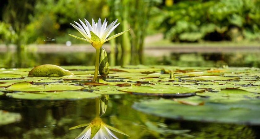 Création de piscines naturelles